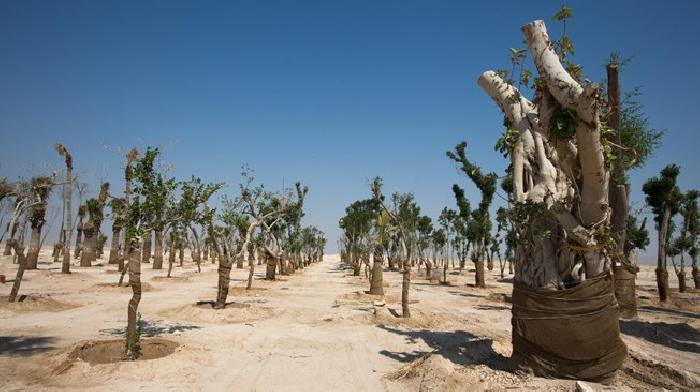 16000 bomen worden geplant in Qatar voor duurzaamheid